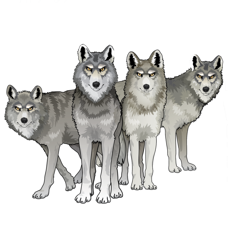 wolves in a pack